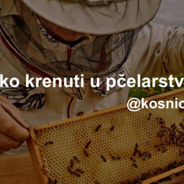 Kako krenuti u pčelarstvo?
