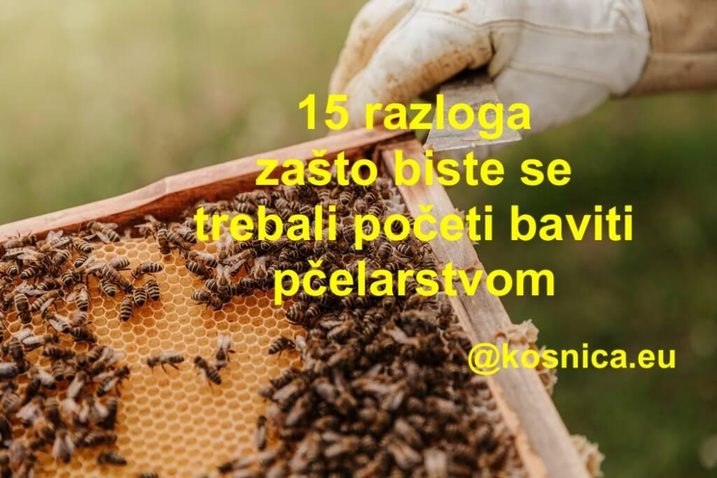 Osnove pčelarstva. Bavljenje pčelarstvom.