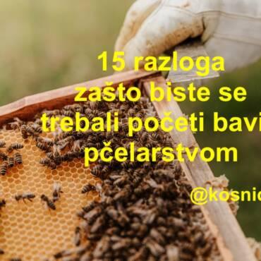 15 razloga zašto biste se trebali početi baviti pčelarstvom već danas